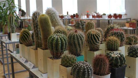 "Izstāde ""Kaktusi un citi sukulenti 2019"
