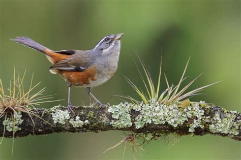 Identify Backyard Birds by 1000 Images About Bird On Shops