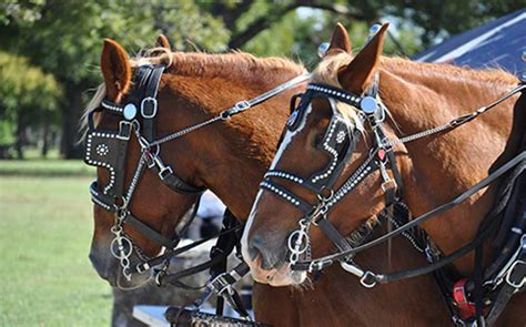 bridles types common uses them equine