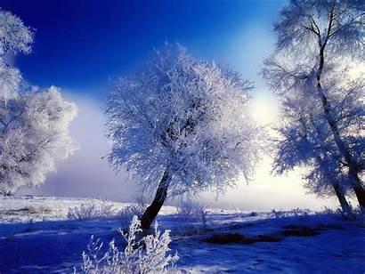 Winter Power Foods Nature Snow Paisajes Desktop