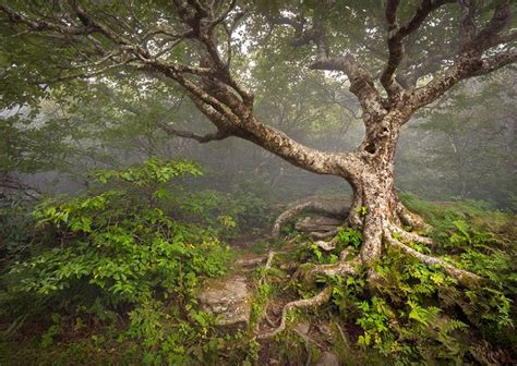 Craggy Gardens by 12 Top Tourist Attractions In Asheville Planetware