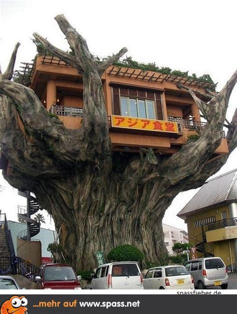 Baum Im Haus by Was War Zuerst Da Der Baum Oder Das Haus Lustige