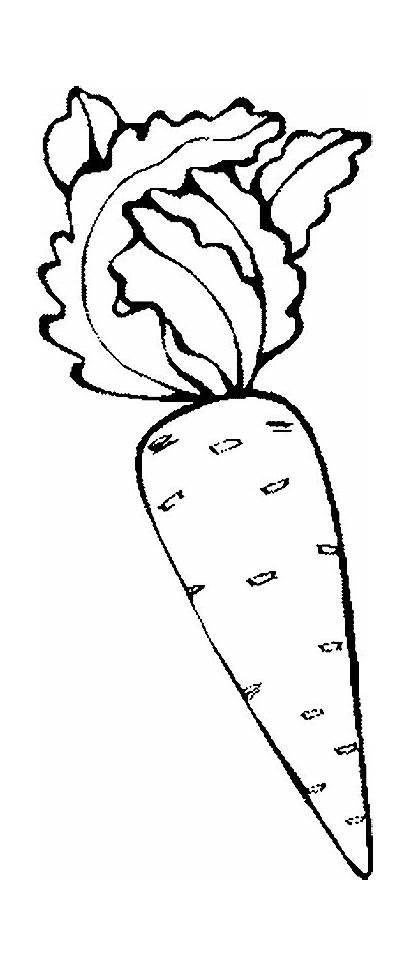 Fruits Vegetables Coloring Drawing Colouring Pages Outline