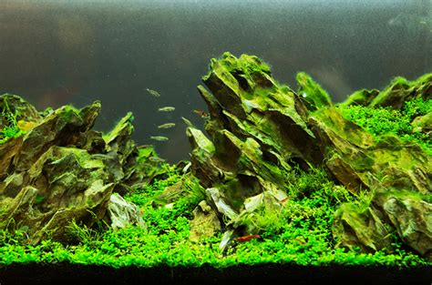 guide to aquascaping aquascaping a tank of