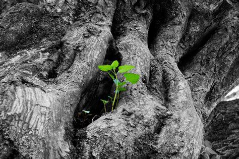 el arbol de la vida vida esperanza  verdad