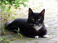Mehr Katzen, aber keine Meerkatzen « Putzlowitscher Zeitung
