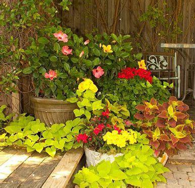 13 Best Flowers For Texas Garden Images On Pinterest