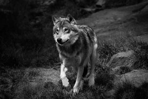 I'll Be Standing *wolf Rp*
