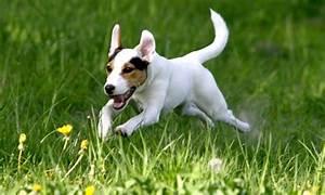 Comment Savoir Si Son Catalyseur Est Bouché : comment savoir si son chien est en bonne sant conseils avis s ~ Gottalentnigeria.com Avis de Voitures