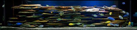 Mbuna Aquascape by Cichlid Tank Pets Aquarium Cichlids