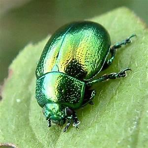 1000+ images about beetles beetles beetles on Pinterest ...