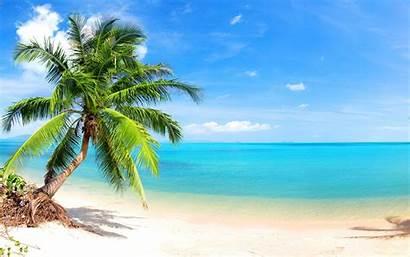 Palm Trees Beach Tropical Tree Beaches Wallpapers