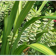 Green Plants Names Images  Reverse Search