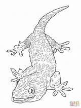 Gecko Coloring Pages Lizard Tokay Drawing Dragon Bearded Monitor Printable Basilisk Flying Aboriginal Baby Drawings Getdrawings Crested Print Supercoloring Dot sketch template