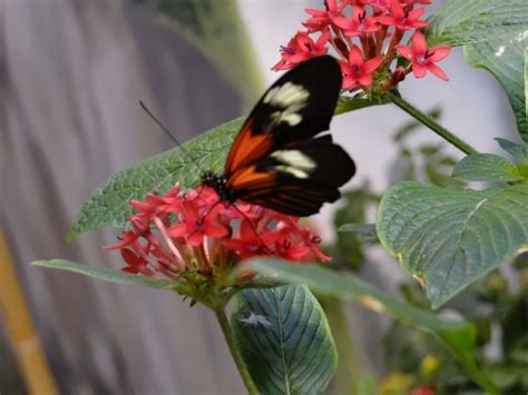 audubon butterfly garden and insectarium bug picture of audubon butterfly garden and
