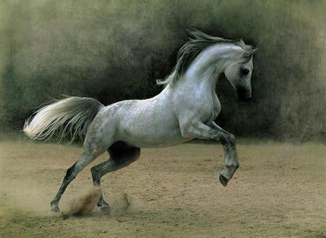 legend   arabian horse