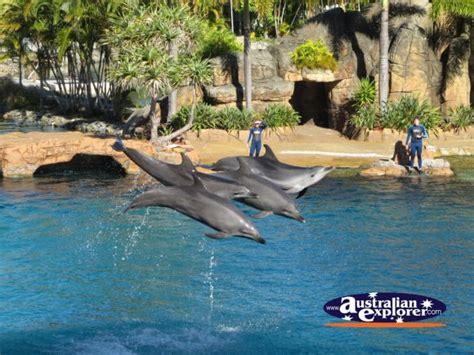 dolphins performing  seaworld desktop theme screensaver