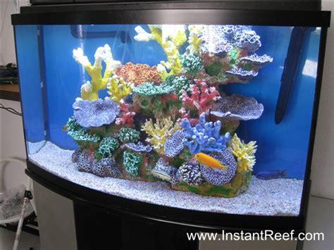 cichlids tank exles cichlid freshwater reef tank