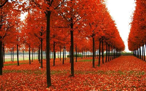 Autumn Season Hd Wallpapers by Photos Of Seasons Autumn Season Hd Wallpaper Seasons Of