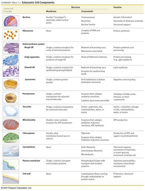 rn  progress cellular adaptation