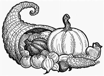 Thanksgiving Cornucopia Clipart Coloring Clip Drawing Printable