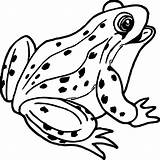 Frog Coloring Pages Realistic Drawing Coqui Frogs Tree Outline Sheet Printable Cartoon Print Clipartmag Animals Sheets Getdrawings Paintingvalley sketch template