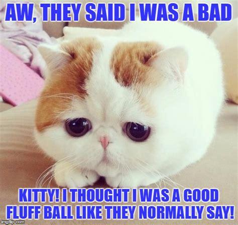 Bad Kitty Meme - sad cat imgflip