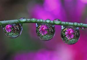 45 Stunning Examples of Water Drop Reflection Photography ...