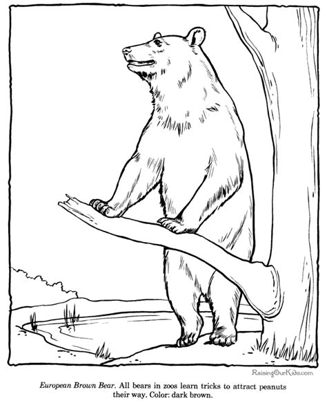 brown bear coloring page zoo animals  images