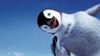 Penguin Happy Bird Wallpapers Birds