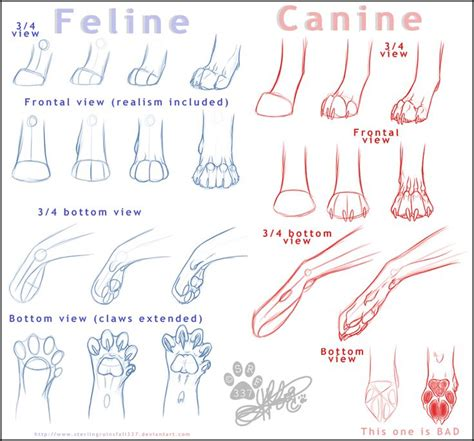 cat dog drawing art wolf cats draw feline  felines anatomy