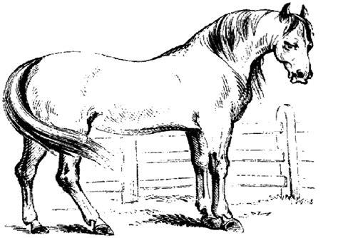 malvorlagen ausmalbilder pferde ausmalbilder und