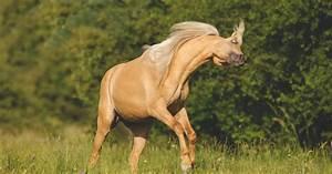 Bilder Von Pferden : headshaking beim pferd das musst du wissen ~ Frokenaadalensverden.com Haus und Dekorationen