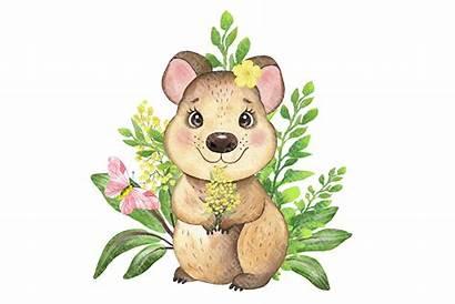 Australian Animals Clipart Koala Animal Watercolor Quokka