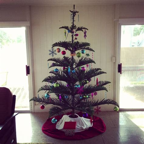 norfolk pine christmas tree christmas pinterest