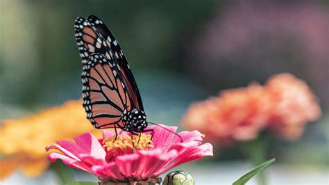 Download Wallpaper 3840x2160 Butterfly Wings Flower