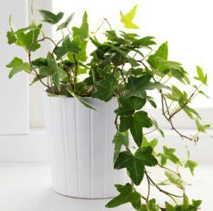plante dans chambre à coucher voici 5 plantes à installer dans la chambre à coucher pour