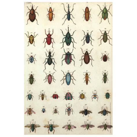 john derian company  jeweled insects roll   sheets