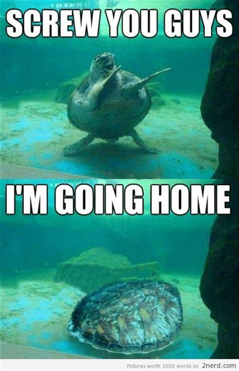 Funny Turtle Memes - dispelling the few extremists myth the muslim world is overcome with hate page 65