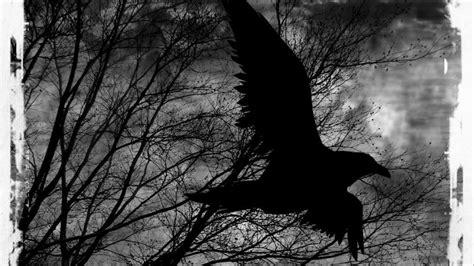 Fallout Hd Wallpaper 1080p Raven Wallpapers Live Raven Wallpapers Kv79 Raven Backgrounds
