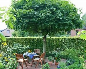 Kleine Bäume Für Garten : gartenb ume mein sch ner garten ~ A.2002-acura-tl-radio.info Haus und Dekorationen