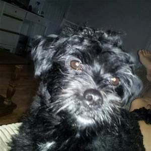 LOST DOG: 1836 Greenwood Rd., Kingston, Kings Co., NS ...