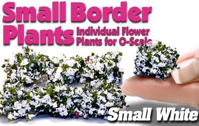 small white border flowers small 1 2 quot white border plants 8 scenic express