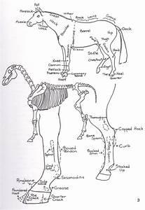 Horse Diagram