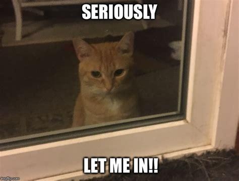 Cute Cat Meme Generator - let the cat in imgflip