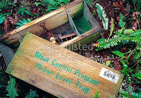predator control stoat trapping tunnel  fenn traps rat
