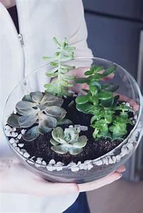 Sukkulenten Im Glas : sukkulenten mini garten zum selbermachen diy ~ Watch28wear.com Haus und Dekorationen