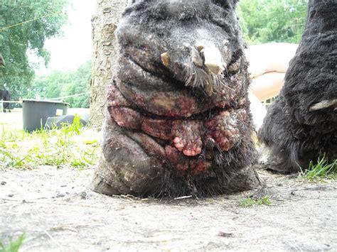 innere medizin pferdepraxis  dinklages webseite
