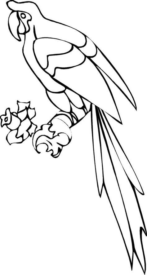 Coloring Picture For Kid by Free Printable Parrot Coloring Pages For