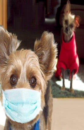 Dogs With Minimal Shedding by Non Shedding Dogs
